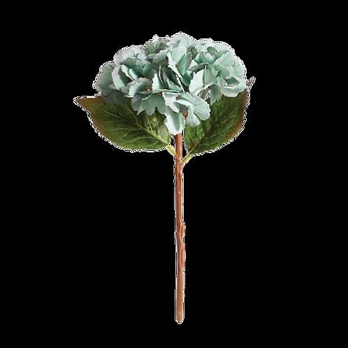 Norfolk Hydrangea Stem