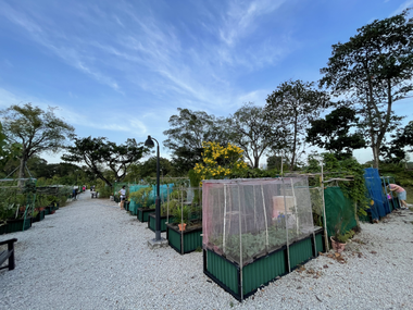 Jurong Lake Gardens Allotment Garden