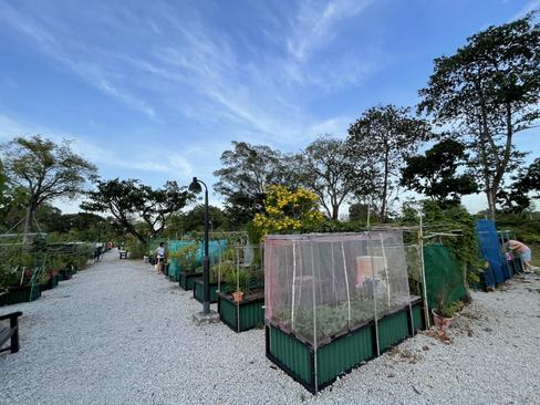 Jurong Lake Gardens Allotment Garden