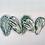 Thumbnail: Mini Cabbage Plates