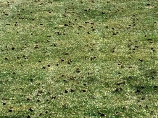 Holes in the Lawn, Aeration.