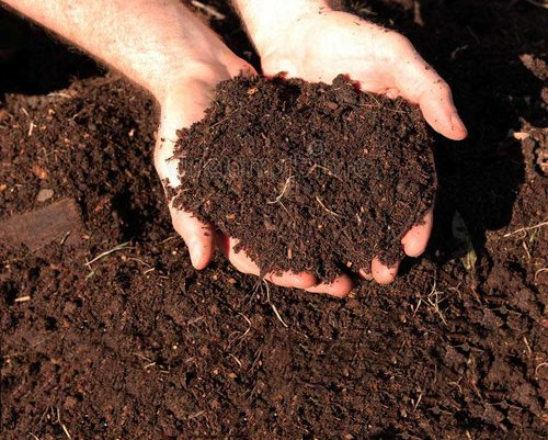 Restoring Soil for Plant Growth.