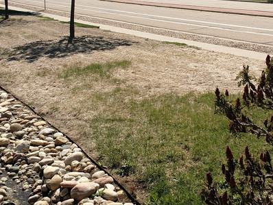 Winter Kill, Lawn Damage During Winter.