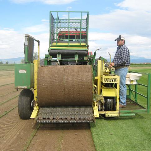 Brandon Harvesting the Big Rolls