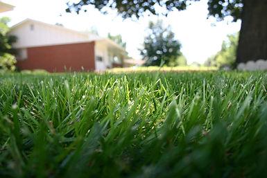 jorden ridnour - GrassUpClose.jpg