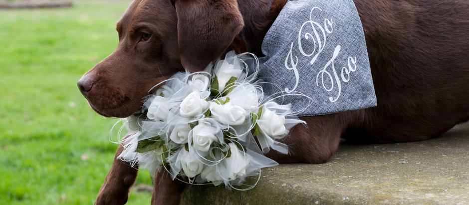 Involving your dog in your wedding