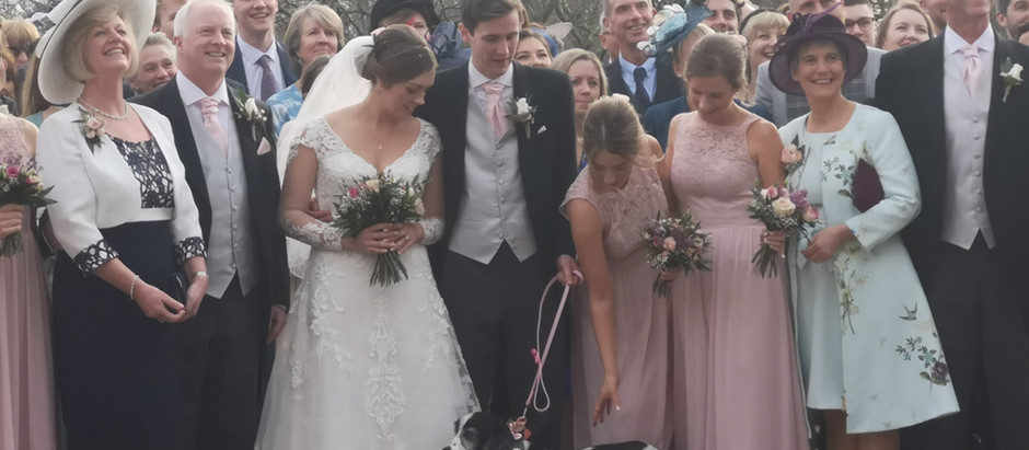 Daisy and her humans get married!