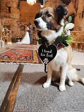 wedding dog sign.jpg