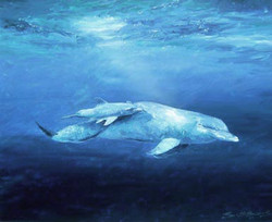 PIC-DOLPHINS1-LARGE