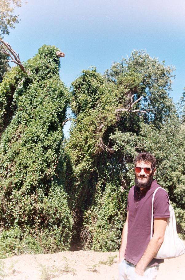 When you met my tree