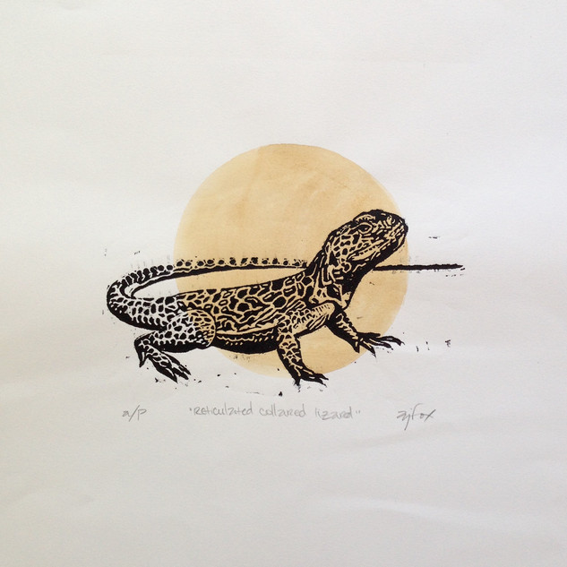 Reticulated Collared Lizard