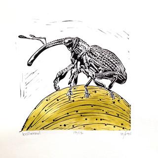 Weevil Print
