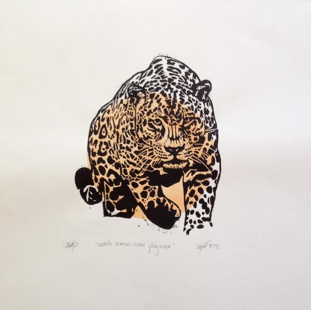 North American Jaguar