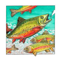 Teeming Trout Illustration