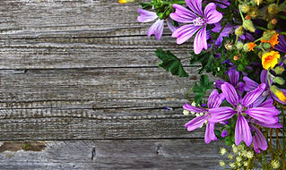 purple-petal-flowers-1479710.jpg