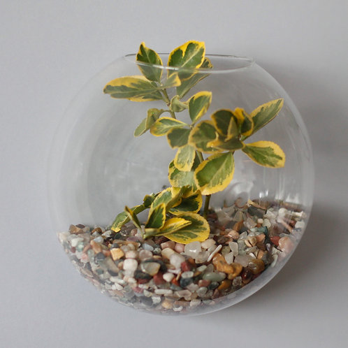 All Glass Terrarium - Large Hanging Wall Bowl