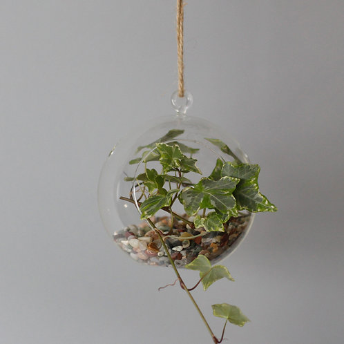 All Glass Terrarium - Globe Hanging Bowl