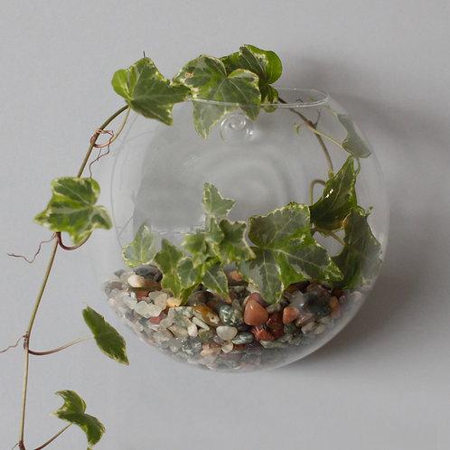 All Glass Terrarium - Small Hanging Wall Bowl