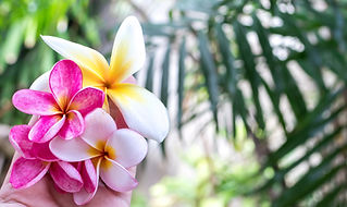 bali-beautiful-beauty-bloom-433539.jpg