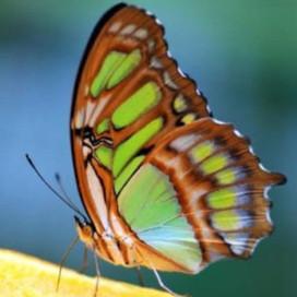 """Belo! """"Síntese. Uma borboleta flanando ao fim da tarde borda em suas asas a síntese do dia"""""""
