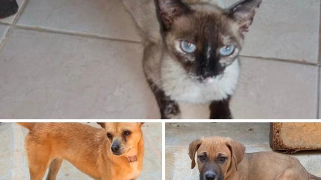 Minas Shopping promove campanha virtual de adoção de cães e gatos até domingo (10)