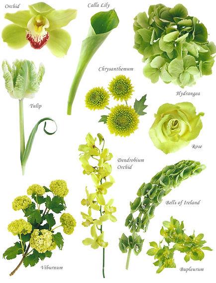 floral-green.jpg