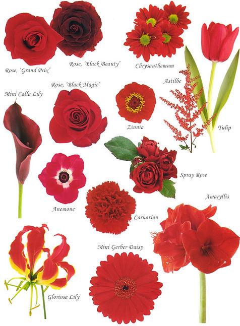 floral-red.jpg