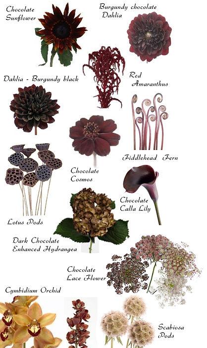brown-flower1.jpg