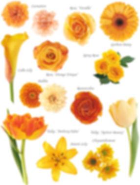 floral-orange.jpg