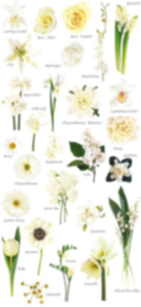 floral-white.jpg