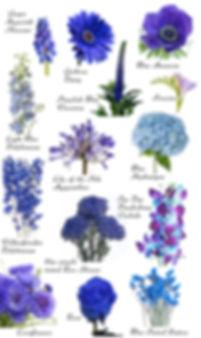 dark-blue-flowers.jpg