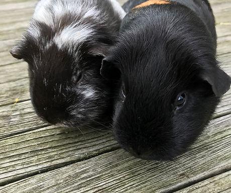 Lenie & Luna.jpg