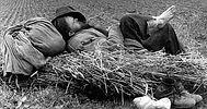 sleeping-hay-hat.jpg