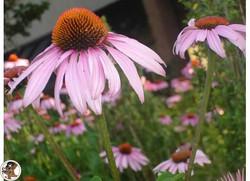 UMBC Flower
