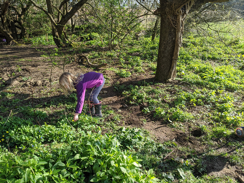 5 year old hunts for ladybirds in woods