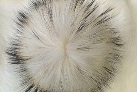 Помпон енот белый с черными и рыжими кончиками  16-20 см»