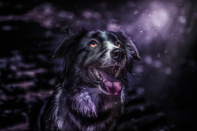 mi perro y su mundo