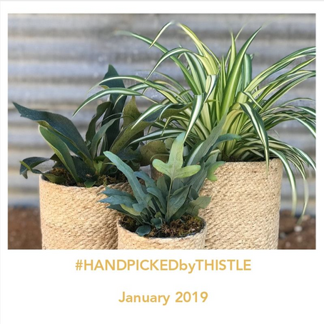 #HANDPICKEDbyTHISTLE: January