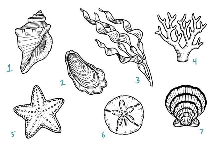 sea life 3.JPG