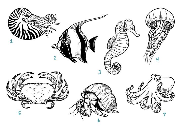 sea life 2.JPG