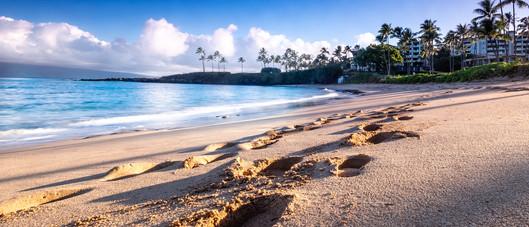 Maui   Kapalua Beach Footprints