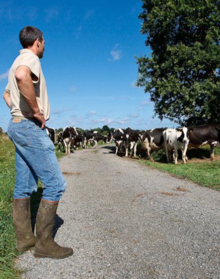 herd management.jpg