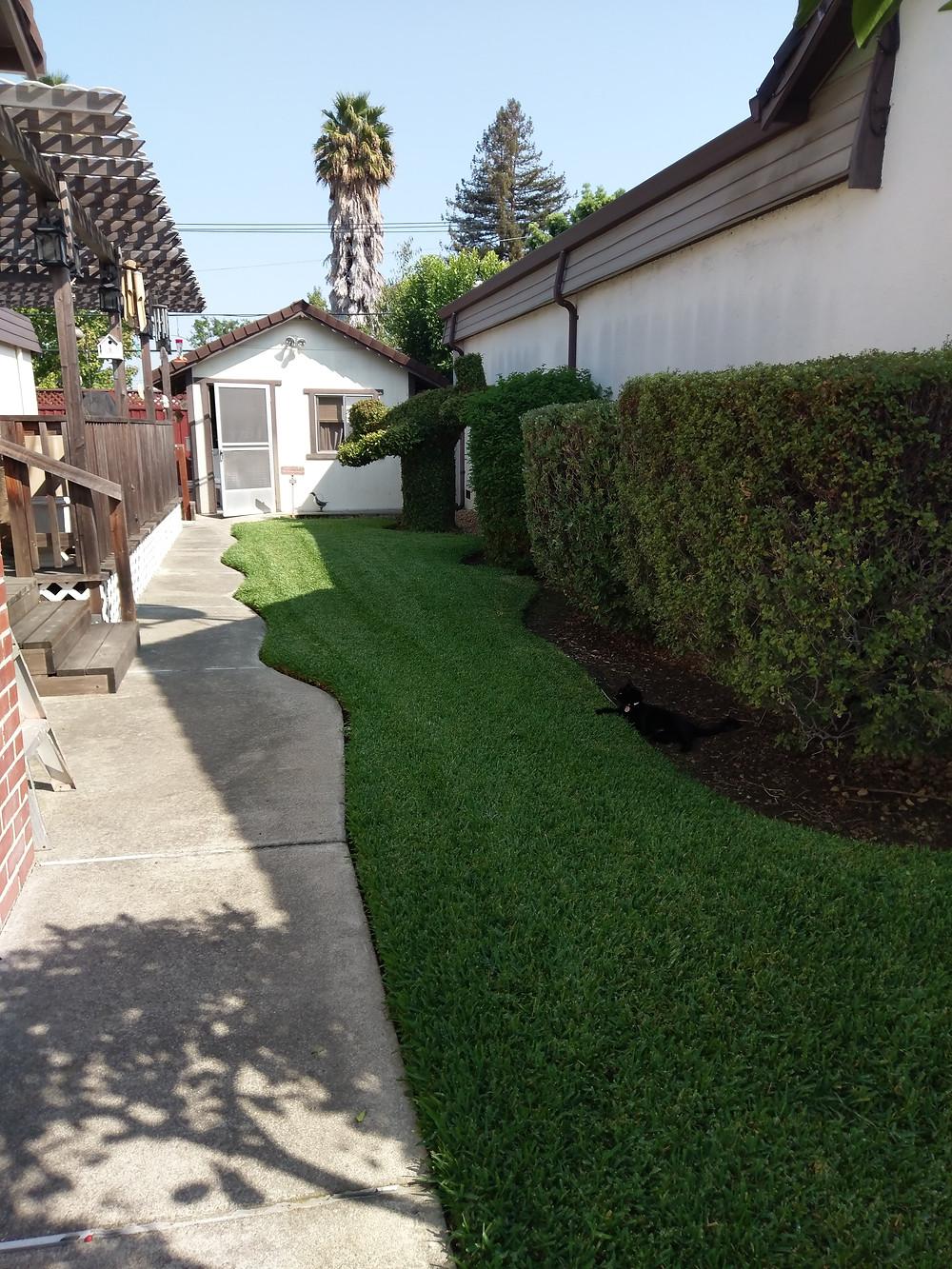 Tiny house, cottage, shed, grass, hedges, blue sky, palm trees, cute home