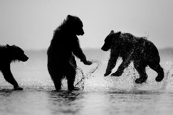 Bears of Lake Clark Alaska