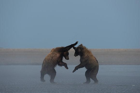 Bears Playing at Lake Clark National Park Alaska