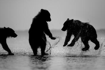 Bears528.JPG