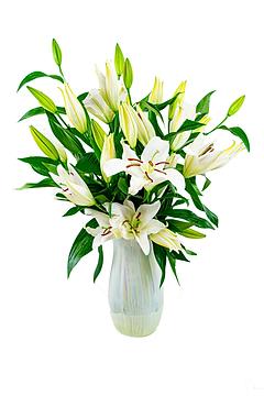 Flowers - Sympathy 1.png