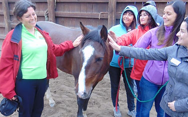 coaching_caballos_doi_lat_consultora_pro