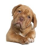 cute-dog-with-tilted-head.jpg
