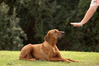 dog+obedience.jpg